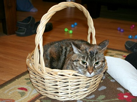 Rusty in a small basket.  1024x768 JPG
